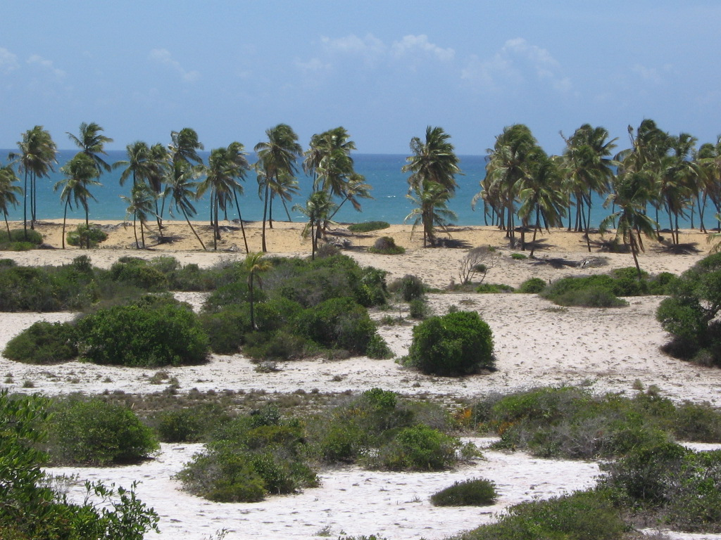 Beach Property with 500.000 m² in Bahia for Sale or Partnership