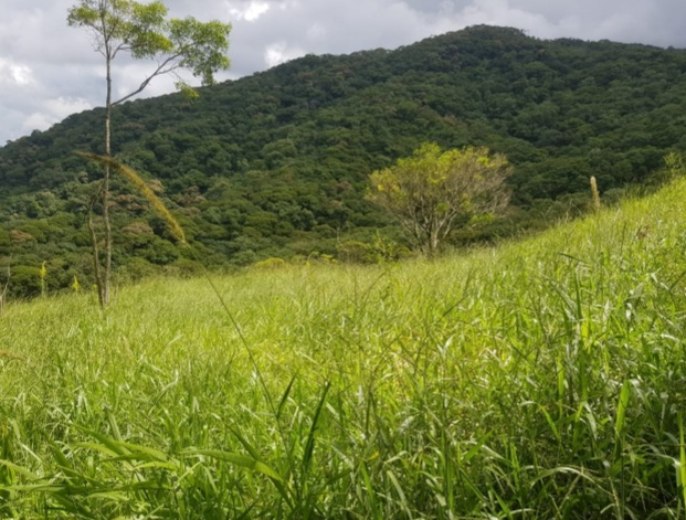 Unique Rural Estate
