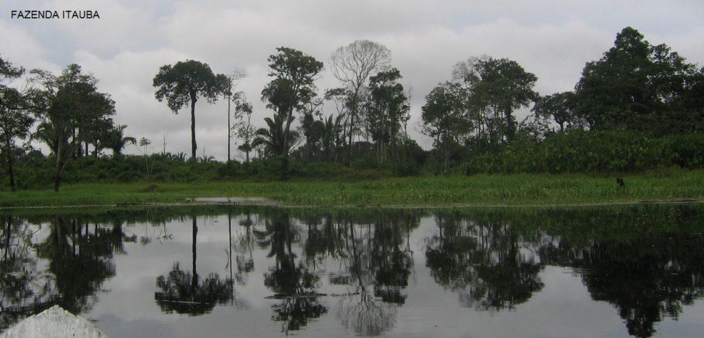 Farm Amazon