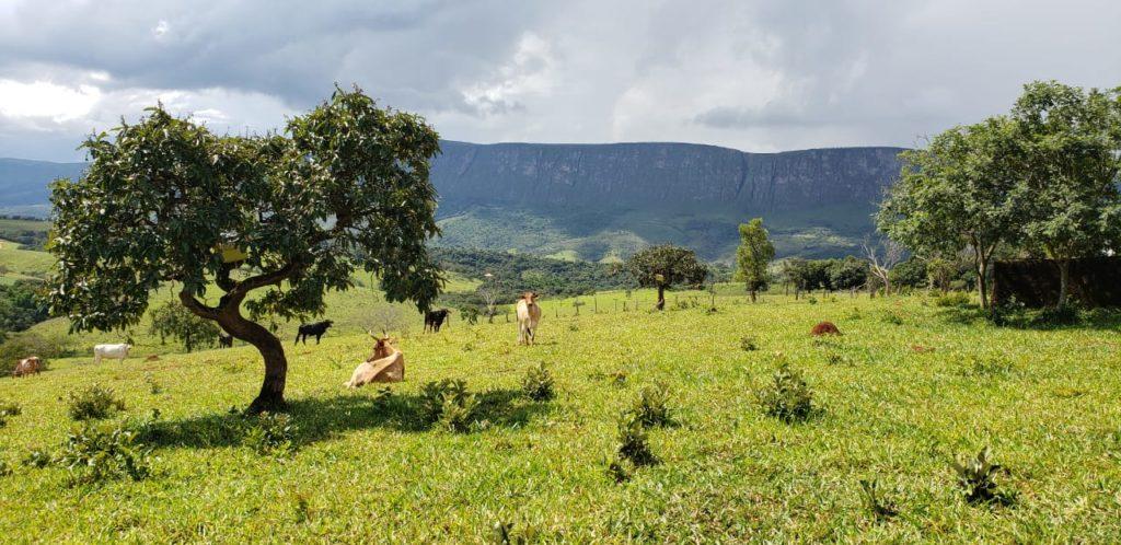 landplot Minas Gerais
